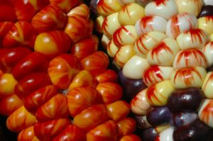 agroecologia-maiz