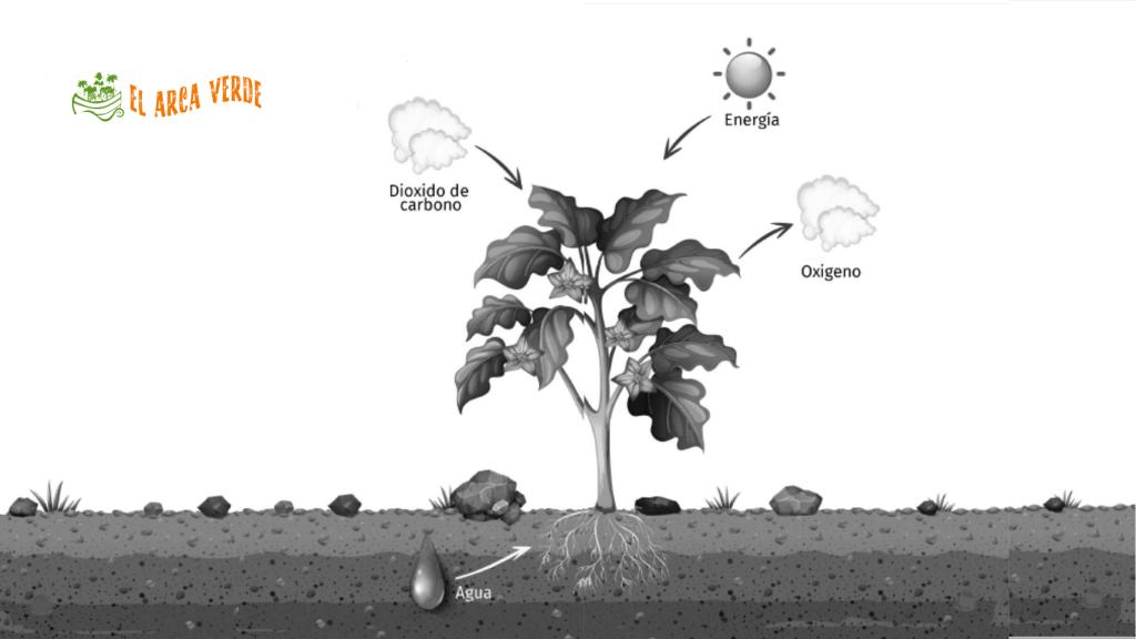 Nutrición de la planta y el suelo